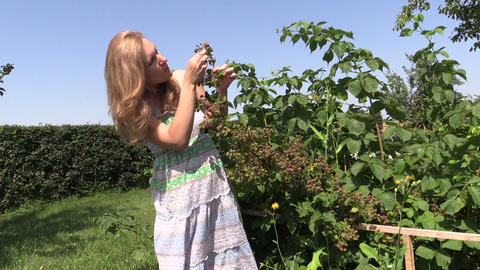 Pregnant woman eats blackberry berry from bush twig in garden Footage