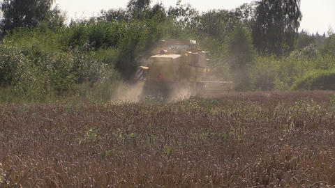 Modern machinery harvest wheat grain field near forest Footage