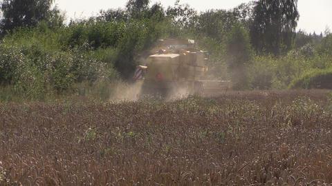 Modern machinery harvest wheat grain field near forest Footage
