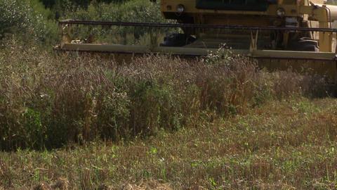 harvester machinery thrash farm corn grain field Footage