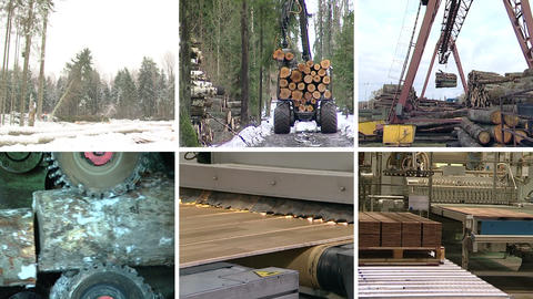 Timber and lumber industry. Parquet board production. Collage Footage