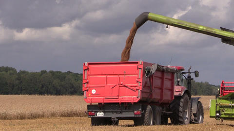 Agriculture machine load harvested grain into truck trailer Footage