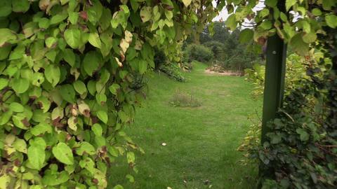 Walking POV imitation between creeper plants arch in garden Live Action