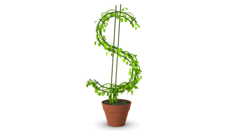 Bonsai. Dollar tree. Growth of dollar tree. Isolated Footage