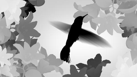 Humming bird Animation
