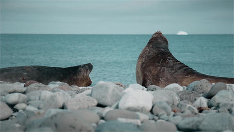 Seals Snapping stock footage
