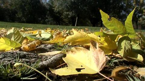 Fall Leaves stock footage