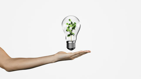 Hand presenting light bulb with growing plant Animation