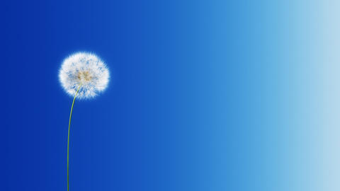 Dandelion Blue Gradient (with Matte) Stock Video Footage
