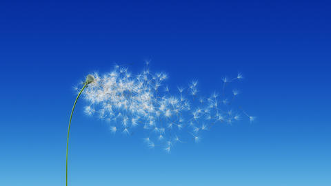 Dandelion Blue Sky (with Matte) Stock Video Footage