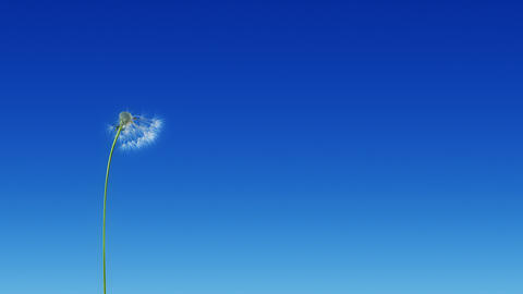 Dandelion Blue Sky (with Matte) Animation