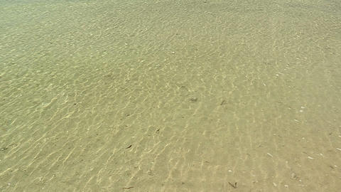 Sea wave and scool of Fish in Taketomi island,Okinawa,Japan Stock Video Footage