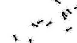 ANT WALK Stock Video Footage