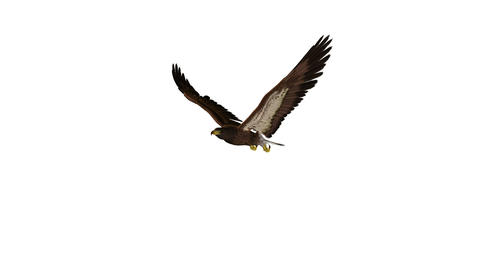 鷲・イーグル Stock Video Footage