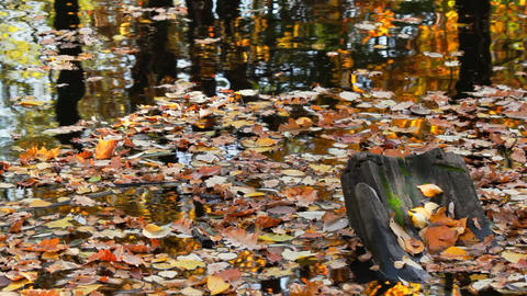 Autumn pond covered with leaves Stock Video Footage