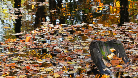 Autumn pond covered with leaves Footage