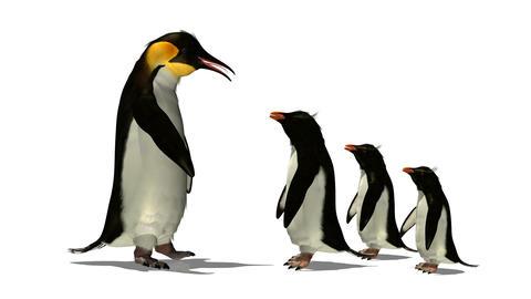 ペンギン Stock Video Footage