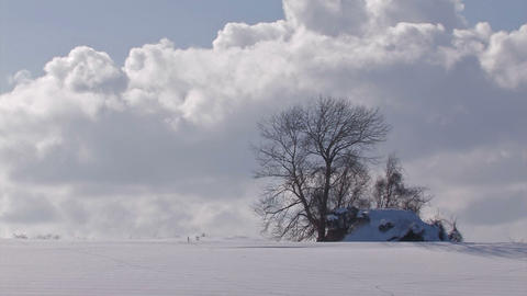 Snowfield and Tree,in Biei,Hokkaido,Japan Stock Video Footage