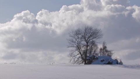 Snowfield and Tree,in Biei,Hokkaido,Japan Stock Video Footage