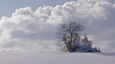 Snowfield and Tree,in Biei,Hokkaido,Japan Footage