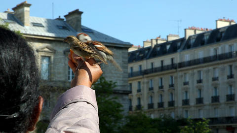 Hand feeding birds in France Stock Video Footage