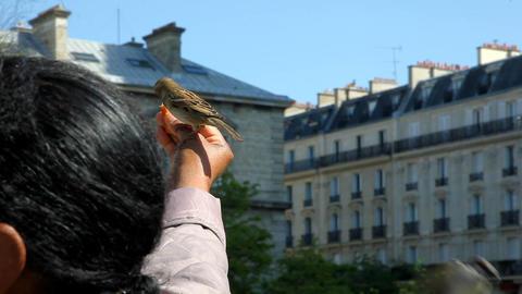 Hand feeding birds in France Stock Video Footage