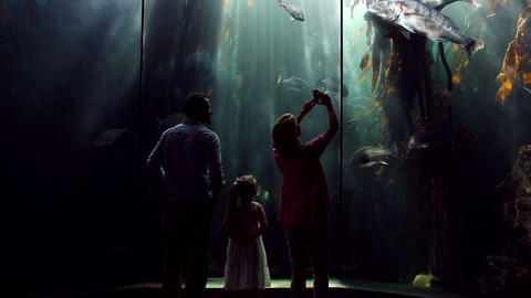 Happy family looking at fish and taking pictures Footage