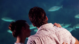 Happy Couple Taking Pictures Of Fish Tank stock footage