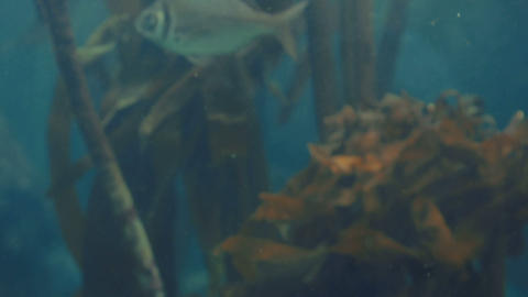 Young Man Touching A Fish-tank stock footage