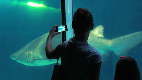 Family Filming A Shark stock footage