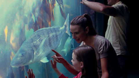 Happy Family Looking At Fish Tank stock footage