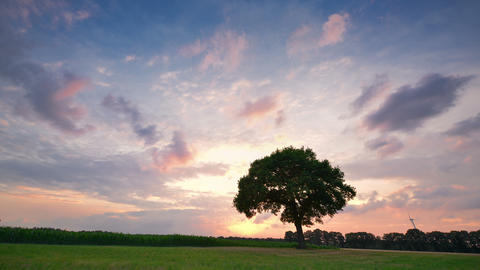 sunset clouds and tree time lapse long 4k UHD 11662 Footage