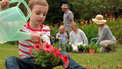 Little boy watering flowers Footage