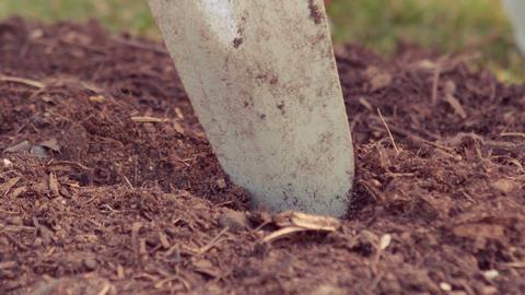 Close up video of gardener using shovel Live Action