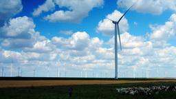 Wind Turbines With Goats, Goatherd Talking On The Mobile Phone, Static Shot stock footage