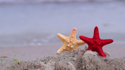 Starfish on the Beach Live Action