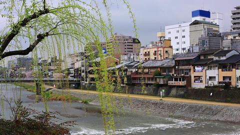 Kamogawa river in Kyoto ライブ動画