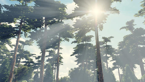 Sun shines through crowns of trees Footage