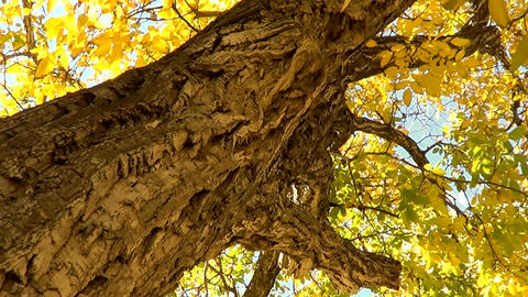 Sun And Autumn Trees 2 stock footage