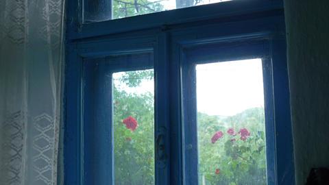 Forgotten Window with Spider Web Footage