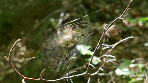 Spider Web in the Woods Footage