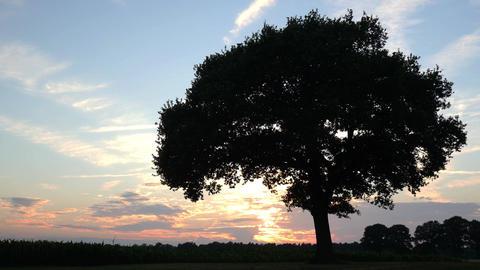 Sunset Clouds Speedzoom Tree Time Lapse 11664 stock footage