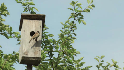 Birdhouse with bird on the tree Footage