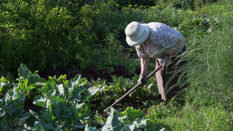 The gardener 11 Footage
