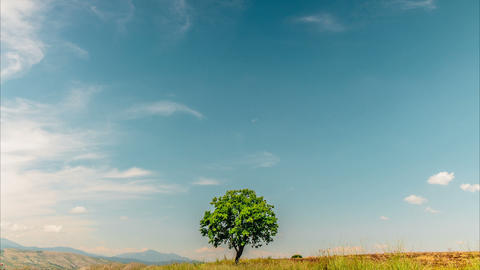 Clouds Scud Over Lonely Tree On Savanna stock footage