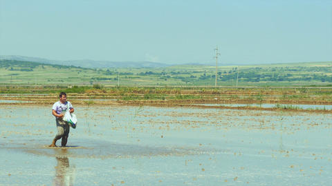 Farmer Throwing Seeds In Wetland stock footage