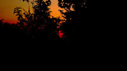 Sunset With Silhouettes Of Trees Branches, Pan Footage