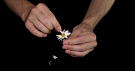 Daisy Divination stock footage
