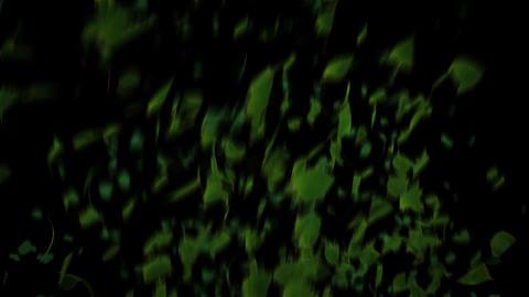 Leaves soars 1080 HD alpha Stock Video Footage