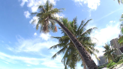 Palm02 Stock Video Footage